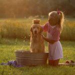 Hogar limpio con mascotas