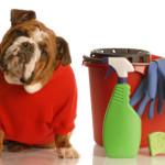 """Limpia los """"accidentes"""" de tu mascota"""