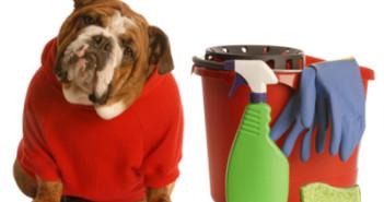limpia-manchas-de-mascotas