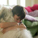Convierte a tu hijo en entrenador de perros