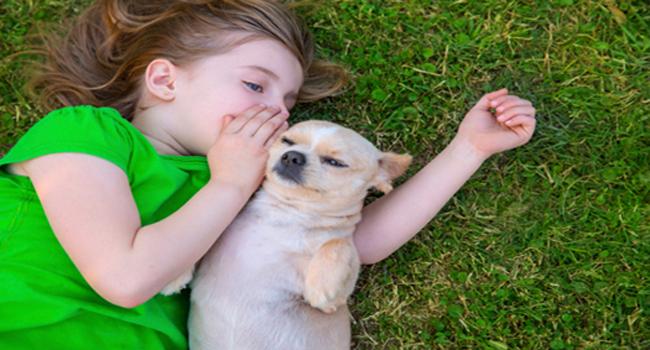 ¿Cómo lograr mascotas y dueños responsables?