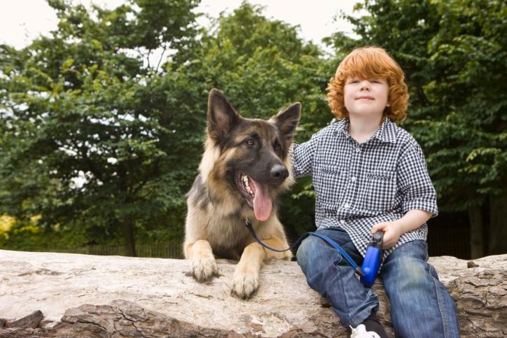 El perro ideal para cada tipo de familia