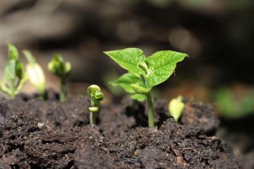 Cómo realizar la plantación de manera efectiva