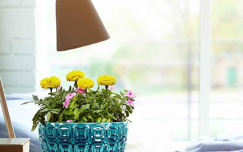 espacios verdes en casa