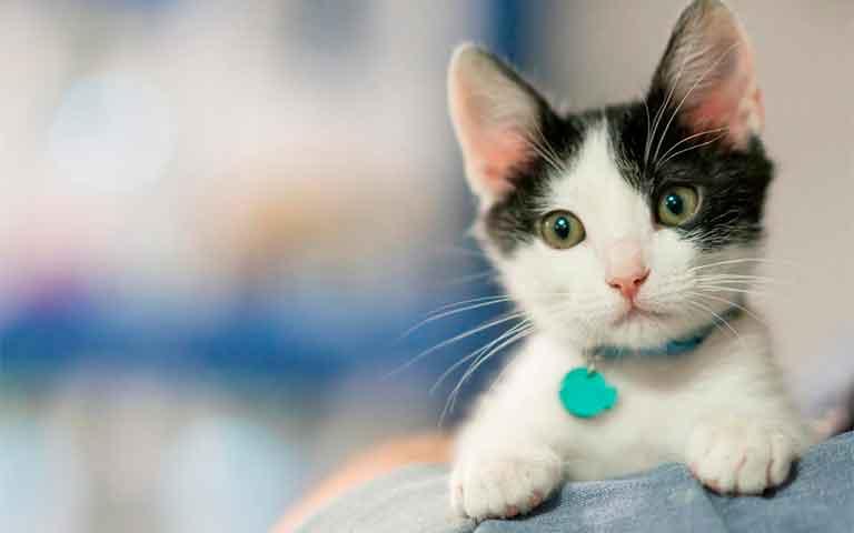 Cinco pasos para convertirte en el dueño ideal para tu gato