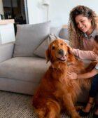 Ventajas de adoptar un perro grande