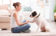 Cómo evito el mal comportamiento de mi perro
