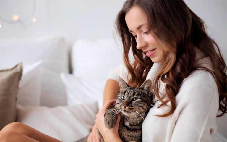 Ventajas de tener un gato como animal de compañía