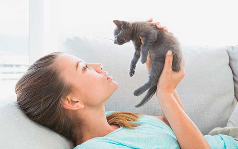 ¿Tu hogar está listo para recibir a un gato?