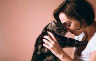 tu gato es el rey de tu hogar y de tu corazón