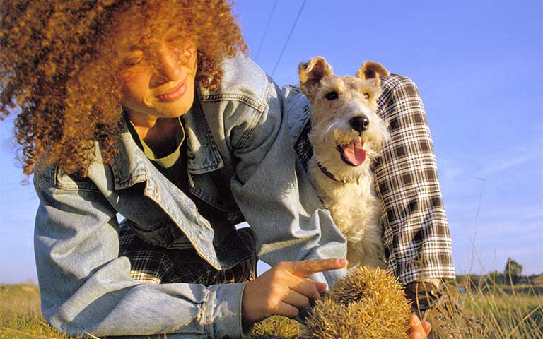El impacto social de las mascotas