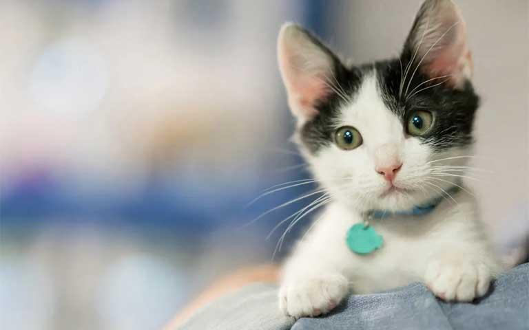 Cómo criar correctamente a tu gatito