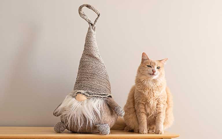 Cómo celebrar a tu gato en su cumpleaños